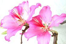 Flores / Flores naturales