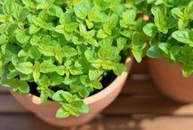 bylinky, detox, pěstování, recepty z bylin, domácí kosmetika