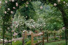 Garden  / by Veet Wiener
