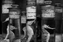 cabinet de curiosités / by Jo Anis