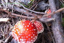 Autumn / A lot of mushroom...