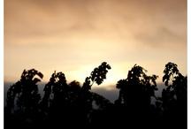 Napa Valley Mornings