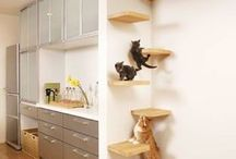 Cat / Cat tower
