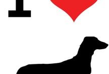 Love my dashound