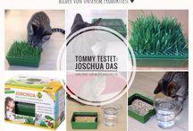 Tommy testet: Katzen Produkttests / Katzen-Produkte im Test: Tommy testet Trends und Neuigkeiten aus der Katzenwelt. Mein-Katzenblog.de