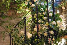 Rosas Románticas