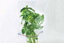 Herbs & Gardens / by ann_ah