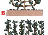 natives and fruit trees
