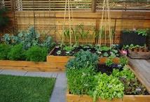 Gardening  / by Erica Deaton