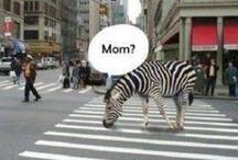 KomikMomik / İt's very funny :)