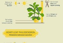 Plants & Greenthumbs
