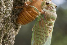 Animals - Insects
