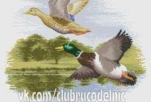 Aves y pintura