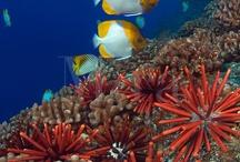 Sotto pressione / Pesci e tutto ciò che sta sott'acqua