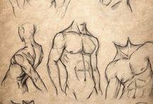 Абдоминальные мышцы