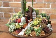 Cacti & Succulent Succulence