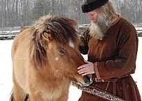 Islandshest icelandic horse