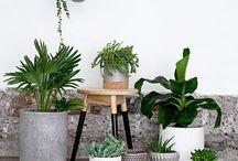Plants ‹3