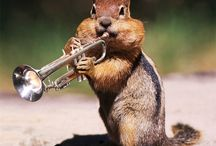 Jazz Trumpet / Anything to do with Jazz and Trumpet