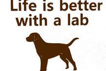 Labradors ❤