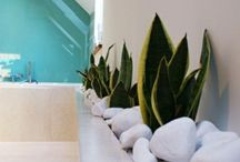 Plants & interior design