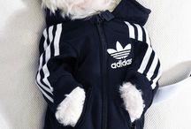 ropa mascota