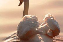Love Birds... / Beautiful Little Birds