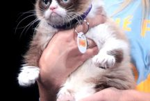 Grumpy Cat / A star is born-that face, that attitude / by Cindy Finley