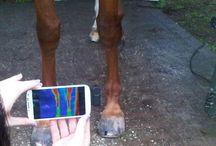 Horse stuff / by Mari Sanchez