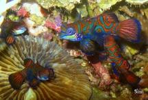 Diving Gilolo Bay, West Halmahera / http://ternateuw.blogspot.com