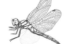 my insect illustration