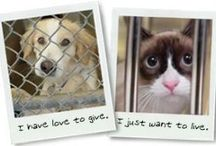 Animal Adoption & Adoration / Pins about animal welfare and pet care, including opposition to abuse, and support for spay & neuter programs and shelter/rescue programs. / by Laura Rogers
