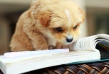 Adorable Readers