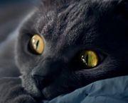 Animales~! / Lleno de imágenes tanto interesantes como tiernas de animales. (De cualquier especie).