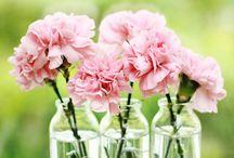 flower: carnation / flower decor featuring carnations