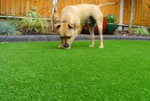 Artificial Grass for Dogs / http://www.asgoodasgrass.co.uk/