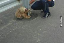 állatkák