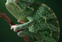 Reptiles / by Seleese Thompson-Mann