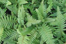 PLANTS_Woodland