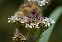 gah, thats cute! / by Jacki Gilpin