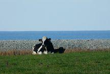 Nos voisins,nos voisines... / Voisins et voisines :Environnement de Bleu Salé