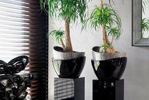 plante interieur exotique