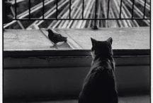 koty na starych fotografiach