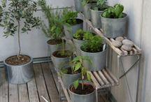 Green fingers & outdoor living