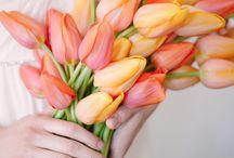 Flores de regalo