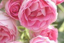Most Beautiful Flowers / Most Beautiful Flowers, Flowers