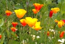 Biodynamics & Gardening / by Jennifer & Rick Tan