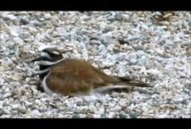 Birds and other interesting animals