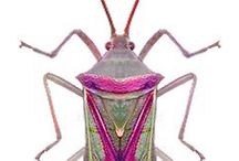 Insects / Good INSECT images for BXA Design unit