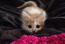 Cica/Cat/